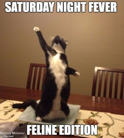 Saturday night fever, feline edition